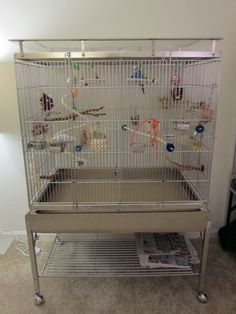 Budgie Cages: How to Set-Up Your Parakeet's Cage with Toys and Perches Bird Cage Design, Diy Bird Cage, Bird Cages, Parakeet Cage, Budgie Parakeet, Budgies, Bird Toys, Pet Store, Pet Birds