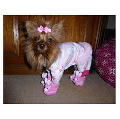 Yorkie, Yazmin completes here nighttime look with adorable pink bunny slippers!