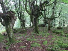 Un bosque maravilloso. Foto: María Pardo.