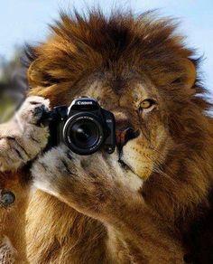 Say Cheese. LOL, gotta love Photoshop!!