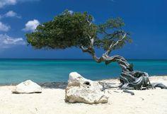 Aruba! Ahhh :)