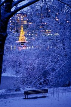 ❥Lit  Christmas Tree in centre of Lost Lagoon viewed from the snow-covered woods of Stanley Park, Vancouver, BC