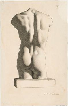 Miehen torso selästä, kipsivalos 1886