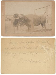 From Saughter Ranch in stock pens at Big Spring, Texas in 1892