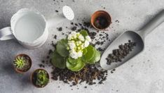 8 Items That Make Gardening So Much Easier to Do! Self Watering Containers, Watering Can, Garden Pests, Garden Tools, Organic Gardening, Gardening Tips, Seed Planter, Types Of Grass, Leaf Illustration