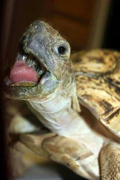 ♥ Pet Turtle ♥  Tortoise.