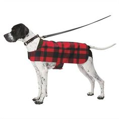 This would be so simple to make from an old blanket or whatever... http://www.turmericfordogs.com/blog