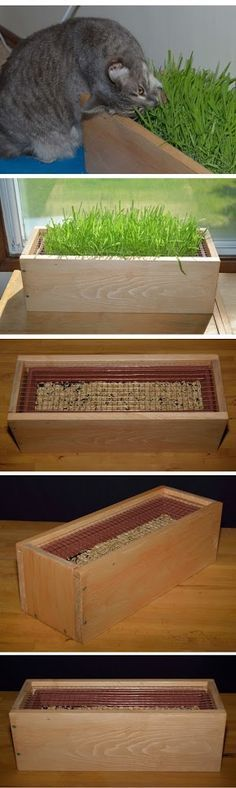 ♥ DIY Cat Stuff ♥ Cat Grass Box with 3/8 steel mesh to keep those little paws out of the dirt…