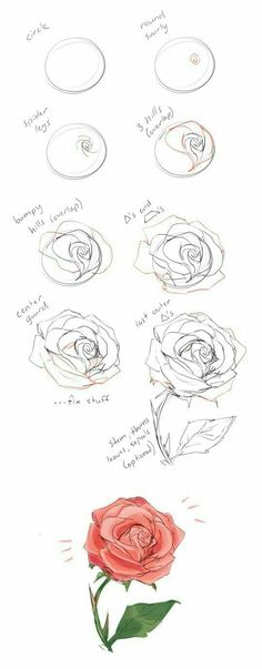 37 Trendy flowers drawing illustration rose - New Tutorial and Ideas Drawing Techniques, Drawing Tips, Drawing Sketches, Painting & Drawing, Drawing Ideas, Drawing Drawing, Sketch Ideas, Tattoo Sketches, Circle Drawing