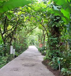A pathway through the Diamond Botanical Gardens, Soufriere, St Lucia.