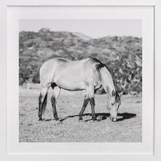 Morning Graze by Jessica Cardelucci at minted.com