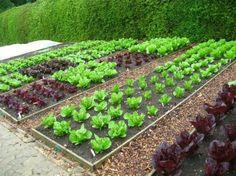 Znalezione obrazy dla zapytania ogródek warzywny