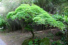 Tesárske Mlyňany - Arborétum 1