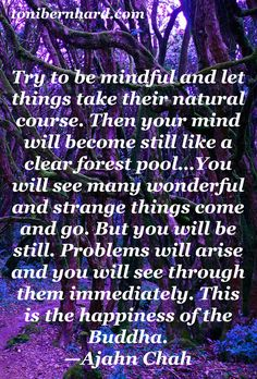 From the Thai forest monk, Ajahn Chah, who taught many Westerners, including Jack Kornfield and Ajahn Sumedho