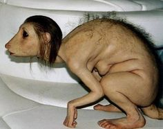 What lab did this come out of? Bizarre Pics of Creepy Animals. World's Ugliest People, Paranormal, Creepy Animals, Strange Animals, Mundo Dos Games, Ugly Men, Bizarre, Cryptozoology, Unusual Things