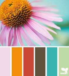 Love the spectrum of hues in this palette perfect for a Playfulness value. | coneflower color via Design-Seeds | commentary via The Voice Bureau at AbbyKerr.com #VoiceValues