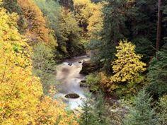Autumn Color, Coquille River, Oregon.jpg