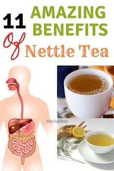 When you brush past nettle in the garden, it can leave a nasty sting on your skin! But that's not all nettle is famous for. It has numerous health benefits when consumed, and we highlight 11 of the best benefits of nettle tea! Nettle Tea Benefits, Green Tea Benefits, Health Benefits, Best Herbal Tea, Herbal Teas, Teas For Headaches, Tea For Colds, Herbs For Health, Healing Herbs
