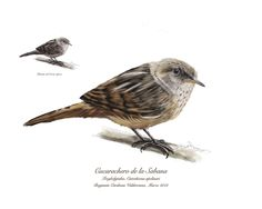 Aves de Cundinamarca / Colombia