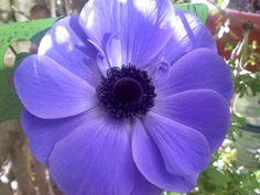 From my garden in TN