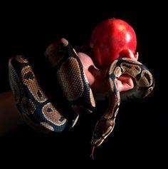 #mygarden #snake #apple #forbiddenfruit