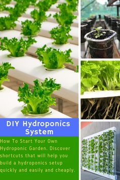 Hydroponic Gardening Ideas Aquaponics DIY - How To Make Aquaponics System At Home - What Is Aquaponics and How You Can Make It Work for You How many times did you not want to grow your own vegetables, without chemicals or preservati… Hydroponics Setup, Hydroponic Farming, Backyard Aquaponics, Hydroponic Growing, Aquaponics System, Growing Plants, Aquaponics Plants, Hydroponic Vegetables, Plant Growth