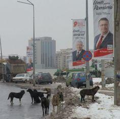Câinii vagabonzi fac legea în Chirigiu