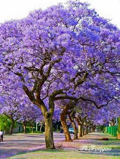 20 Best Travel Destinations for 2020 the Most Beautiful Places Beautiful Landscapes, Beautiful Gardens, Beautiful Flowers, Beautiful Places, Trees And Shrubs, Flowering Trees, Trees To Plant, Unique Trees, Colorful Trees