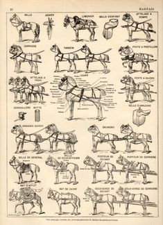 Horse Harness Antique Print 1897 Lithograph Draft by Craftissimo, Horse Gear, Horse Tips, Breyer Horses, Draft Horses, Horse Harness, Horse Posters, Horse Carriage, Vintage Horse, Horse Drawn