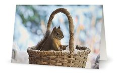 Squirrel Cards Woodland Animals Animal by PeggyCollinsPhotoArt