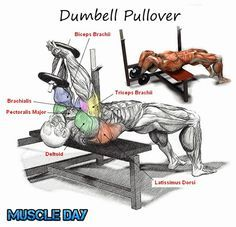 dumbbell pullover muscles worked - Google Search | WEIGHTS & FAT ...