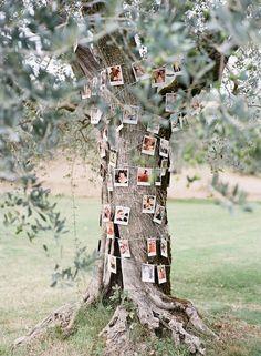 photo garland on a tree http://weddingwonderland.it/2016/05/idee-per-decorare-il-matrimonio-con-fotografie.html