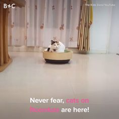 Cats + Roombas are a match made in heaven.