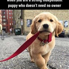 I don't need you stupid hooman. #dogs #9gag @9gagmobile #awesome #followback #instafollow
