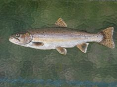 Handcarved Trout Fish Wall Hanging by StinnettStudio on Etsy, $75.00