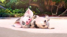 Pua Moana Disney Movie Pig Wallpaper