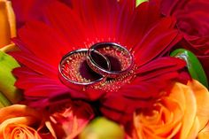 Wedding Photography Ideas : Danielle & Marcs Longfellows Saratoga Springs Wedding  NY Wedding Photographer