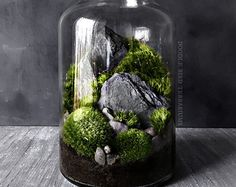 Winter Woodland Forest Scene Terrarium with Pine by DoodleBirdie