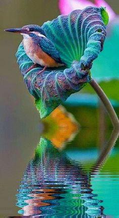 Una flor el un buen lugar donde descansar La naturaleza a veces nos muestra su especial magia obsequiándonos con imágenes como esta, un lindo pajarito se posa sobre una flor que tiene los mismos...