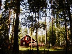 cool red cabin in the woods