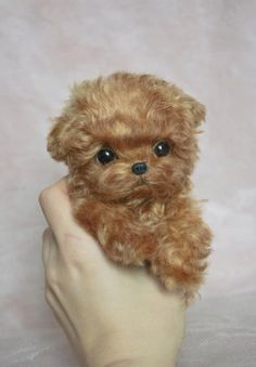 Cute Baby Puppies, Super Cute Puppies, Baby Animals Super Cute, Cute Funny Animals, Tiny Puppies, Tiny Dog, Dog Baby, Teacup Pomeranian Puppy, Teacup Poodle Puppies