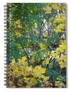 Elm Tree, Notebooks For Sale, Weird Stories, Weird Creatures, Green Trees, Basic Colors, Color Show, Colorful Backgrounds, Fine Art America