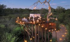 Dream Tree HouseHoneymoons - Lion Sands' Chalkley Tree House, Kruger National Park, South Africa