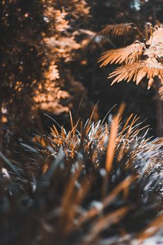 tilt shift lens photography of brown plants and tree photo – Free Grass Image on Unsplash Blur Image Background, Desktop Background Pictures, Light Background Images, Studio Background Images, Background Images For Editing, Picsart Background, Background For Photography, Photography Backgrounds, Hd Background Download