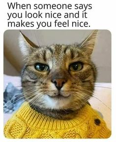 Singing Caturday Hymns With Some Purrfect Cat Memes - I Can Has Cheezburger? Best Cat Memes, Happy Pictures, Happy Pics, Cute Little Animals, Adorable Animals, Cat People, Cool Cats, Cuddling, Singing