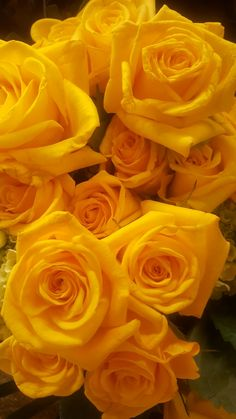 By Artist Unknown. Beautiful Rose Flowers, Love Rose, Amazing Flowers, Fresh Flowers, Flower Phone Wallpaper, Flower Wallpaper, Rose Pictures, Mellow Yellow, Yellow Flowers