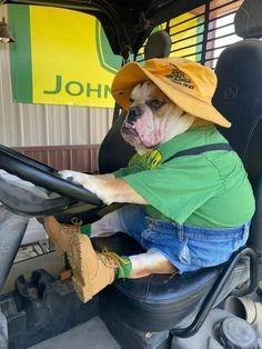 Funny Dog Memes, Funny Animal Memes, Cute Funny Animals, Cute Baby Animals, Funny Cute, Funny Dogs, Hilarious, Cute Dogs And Puppies, Bulldog Puppies