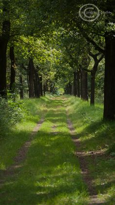 Green nature image landscape scene into the by piekfotografie