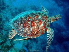 diving indonesia - Buscar con Google