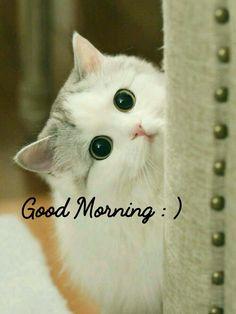 Good Morning Good Night, Morning Wish, Saturday Morning, Good Day, Morning Qoutes, Morning Greetings Quotes, Morning Messages, Morning Pictures, Good Morning Images